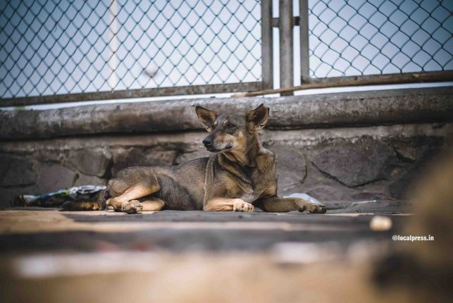 Do your bit for street dogs and other strays during the coronavirus lockdown