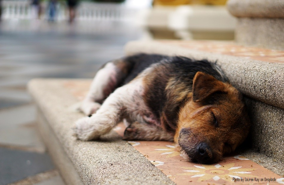 Diwali 2020 will be the best one ever for pets and stray animals