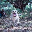 Navi Mumbai needs dog parks: City pet dog parents urge