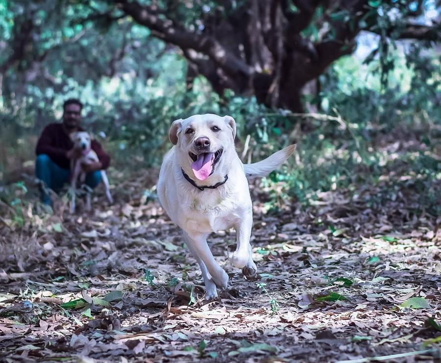 Navi Mumbai needs dog parks: City pet dog parents urge