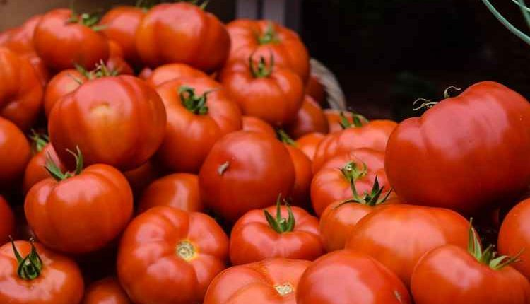 Tomato prices soar in Navi Mumbai; May increase further